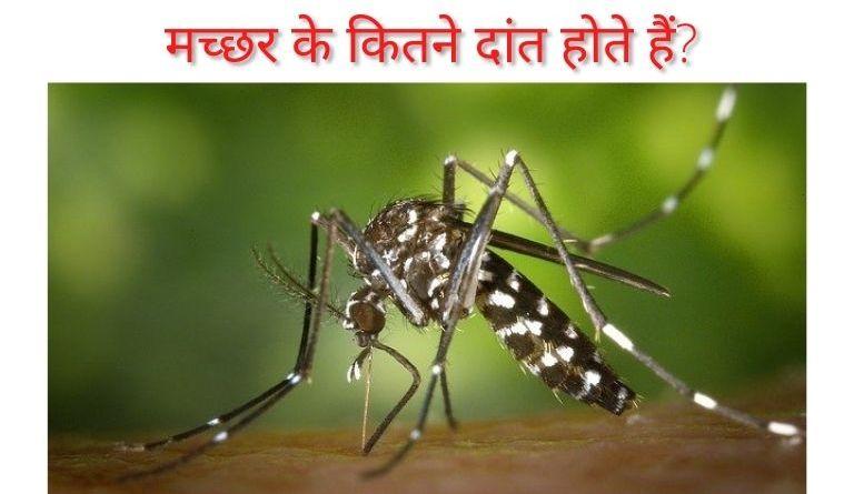 मच्छर के कितने दांत होते हैं? | Machhar Ke Kitne Dant Hote Hai?