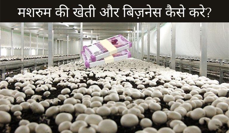 Mushroom Business Ideas in Hindi?