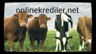 hayvancılık hibe krediler