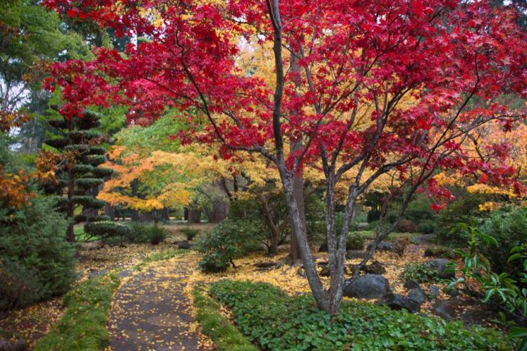 autumn garden path