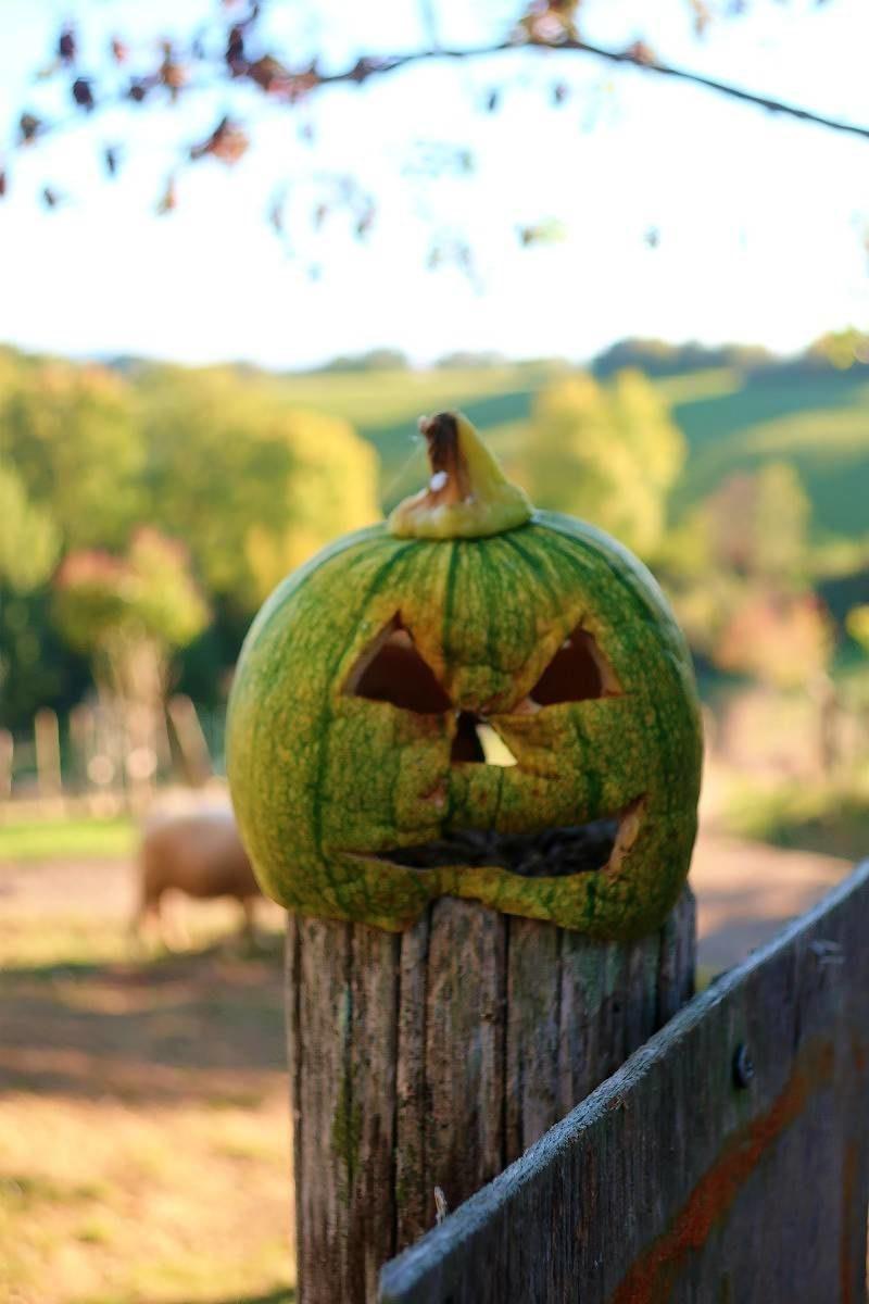 blog lifestyle toulouse halloween e1541162118889 - Le Parc Animalier Saint Michel