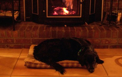 Heating for Dogs – 3 Options to Consider