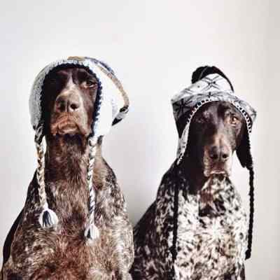 dogs style2