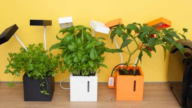 Smart indoor farming gadget