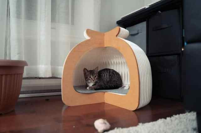 Origami-inspred cat bed