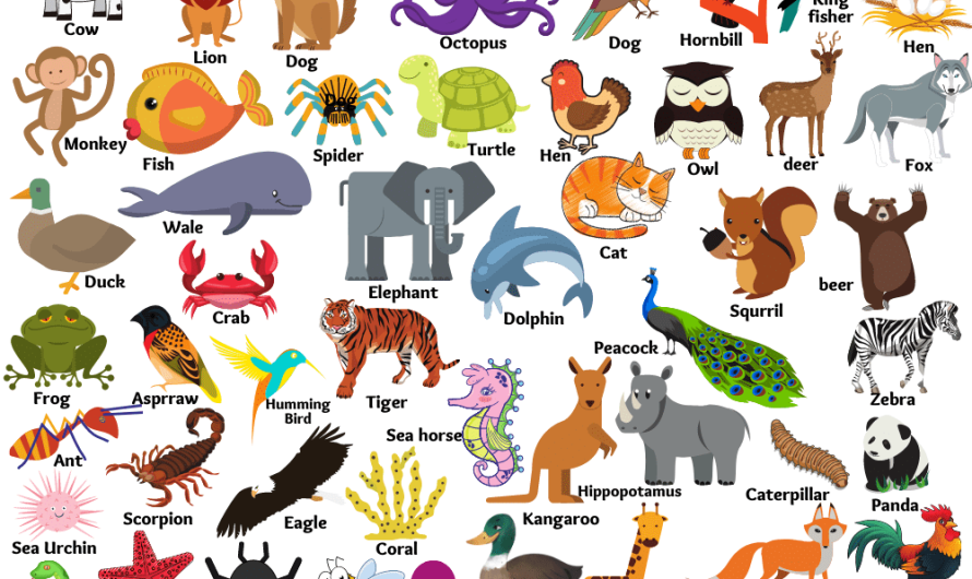 Animals Name in English | Types of Animals with pictures, List for Kids