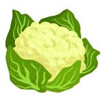 culiflower vegetables name