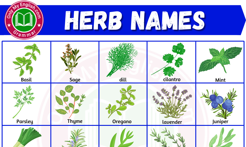 Herbs Name: List of Herbs Name in English
