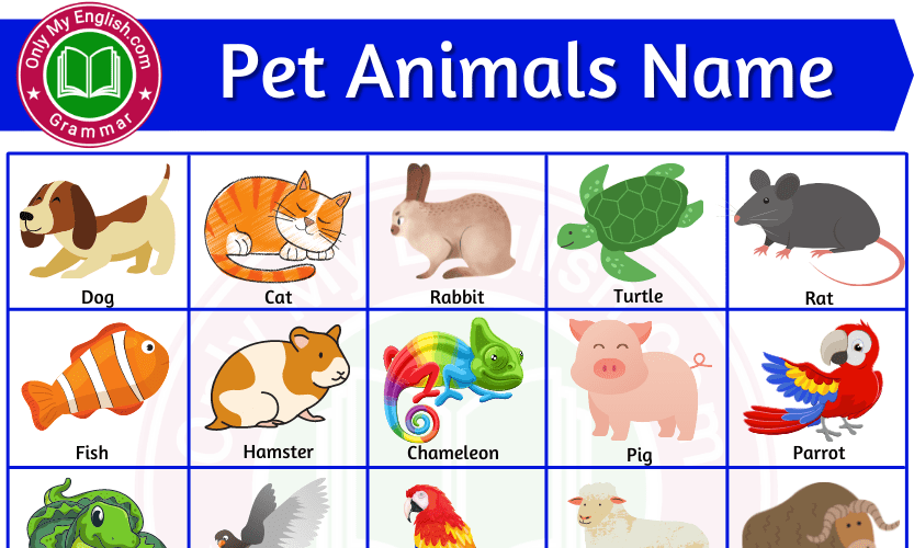 Pet Animals Name: List of Pet Animal In English with Pictures