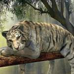How many tiger reserves are in India
