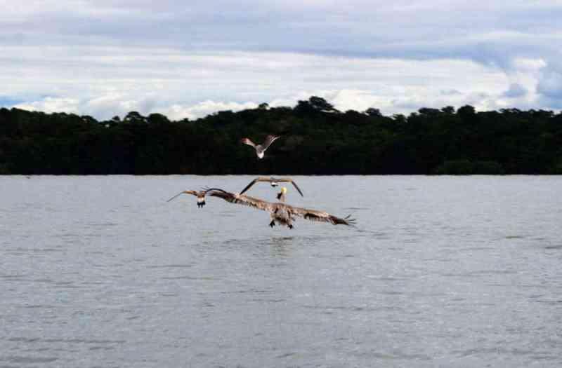 Rio Dulce Canyon - flying birds