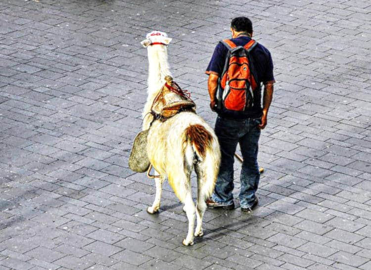 Man with his pet in Popayan Colombia