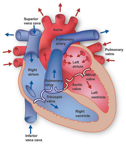 What Is Hole In The Heart?