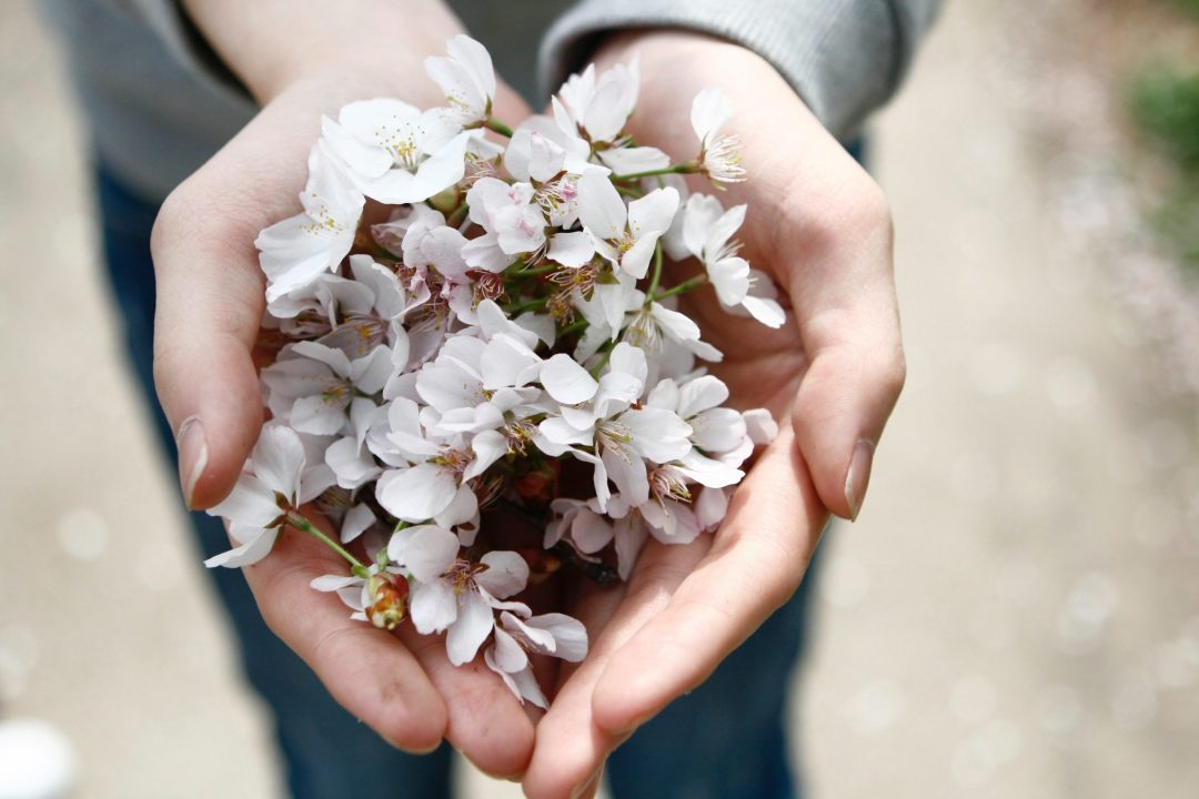 hands holding blossoms