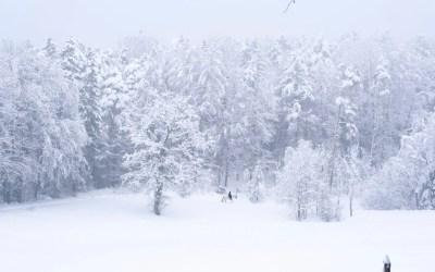 Winter Warmer