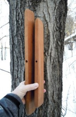 Someone holding two vertical planks of wood up to a maple tree to demonstrate the approximate amount of non-conductive wood that results from one taphole.