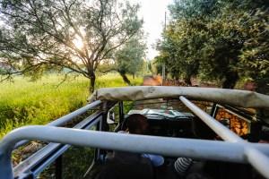 safari jeep