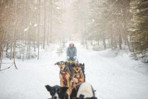 Traîneau à chiens au Québec en hiver dans l'Outaouais