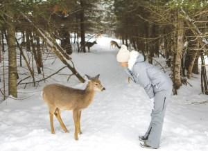 Rencontre avec un cerf de Virginie dans le Parc Oméga au Québec en hiver