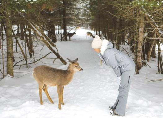 Le parc Oméga l'hiver, près de Montebello au Québec