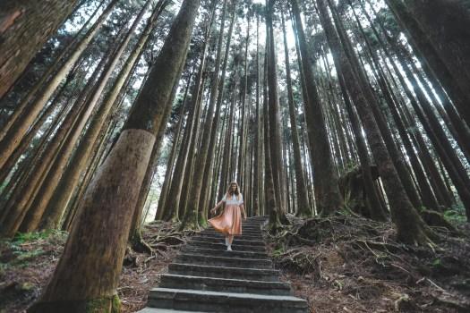 forêt Taïwan blog