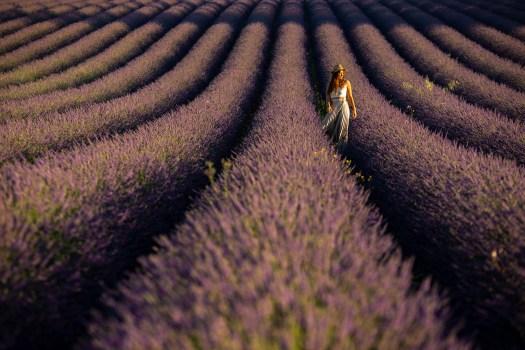 champs lavande puimasson blog
