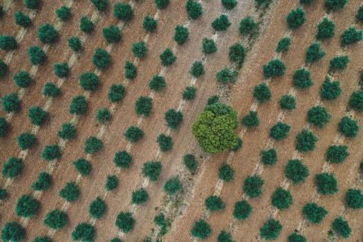 champs oliviers verdon