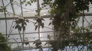 Indoor hanging garden