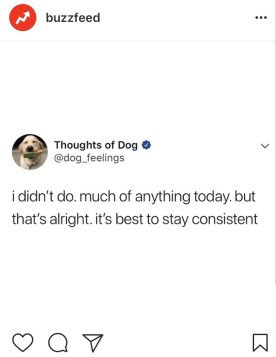 I did nothing all day meme. On My Way To Happiness funny thoughts of a dog I did nothing all day meme start here page