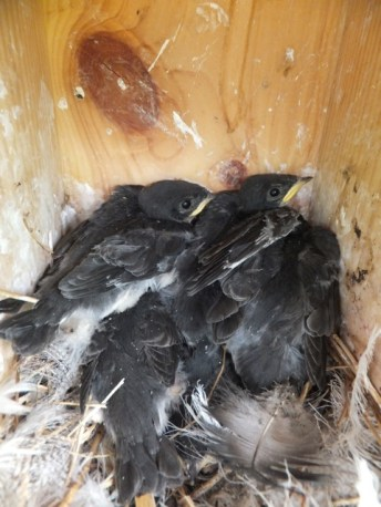 Crowded, soiled nest.