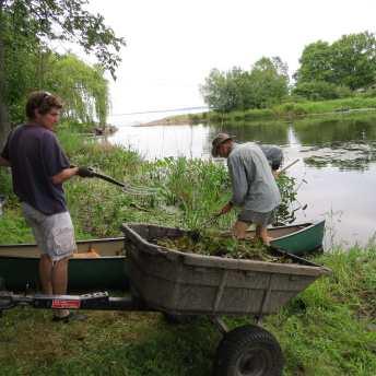 George Spak and Tim Johnston unloading water chestnut plants.
