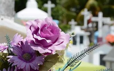 fiori-rosa-cimitero