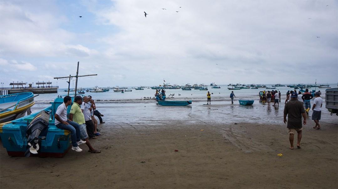 voir des baleines en Equateur