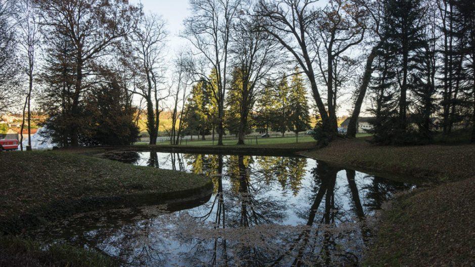 reflet arbre eau mal du pays