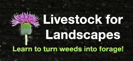 Livestock for Landscapes Learn to turn weeds into forage