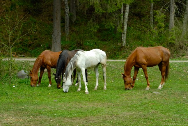 To Graze With Horses Is To Think Out Of The Box On Pasture