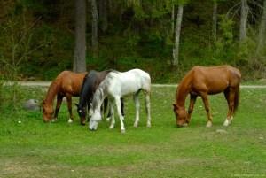 horses-pasture-646x433