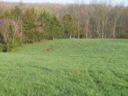 Spring Grass, April 1, Greg and Jan's Green Pastures Farm