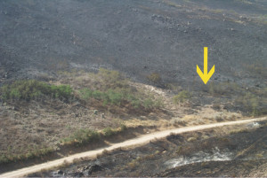 The area untouched by the fire is the goat firebreak. The yellow area points to the area cleared by hand crews just the week before the fire.