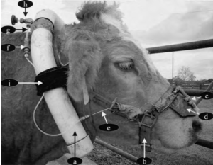 "Here's just one example of a device researchers have built to collect and measure methane outputs from a cow. It's not an easy task and thus it's been difficult for us to figure out exactly how much a cow ""emits."""
