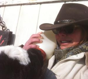 Sandra feeding a calf