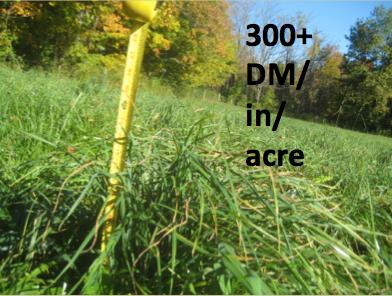 300 lbs. dm:acre