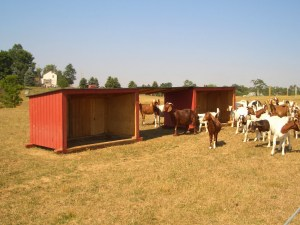Calf shelters