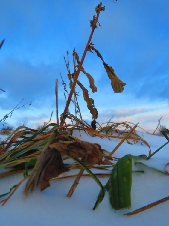Winter Stockpiled Grass