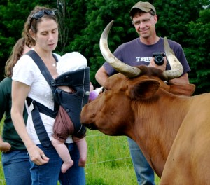 Rachel and baby Ellery, and Will Amedon enjoy the American Devons cows on a pasture walk in Vermont
