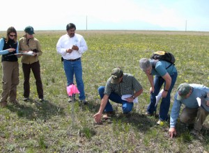 These pasture walkers are learning all about rangeland health assessments.  Because it was an unusual topic it attracted wildlife biologists, botanists AND ranchers.  It was a nice way for everyone to find out how much they all had in common.