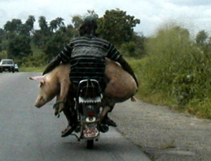 If you're hauling your livestock on a motorcycle, make sure your butcher has parking facilities that will work for you and your animals.