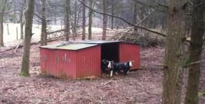 Pig Shelter