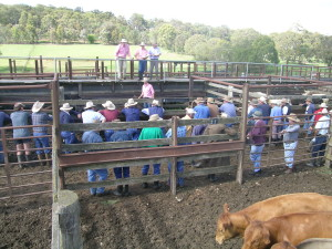 Cattle_sale