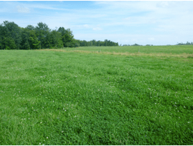 A well-managed northern New York pasture.  Photo by Kitty O'Neil.